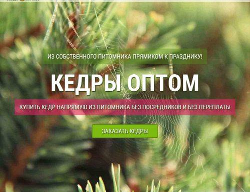 «КЕДР КУПИ» — деревья из питомника оптом и в розницу